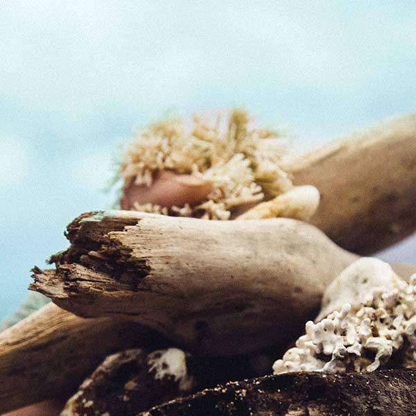 Photo d'une main tenant des coquillages et un morceau de bois.