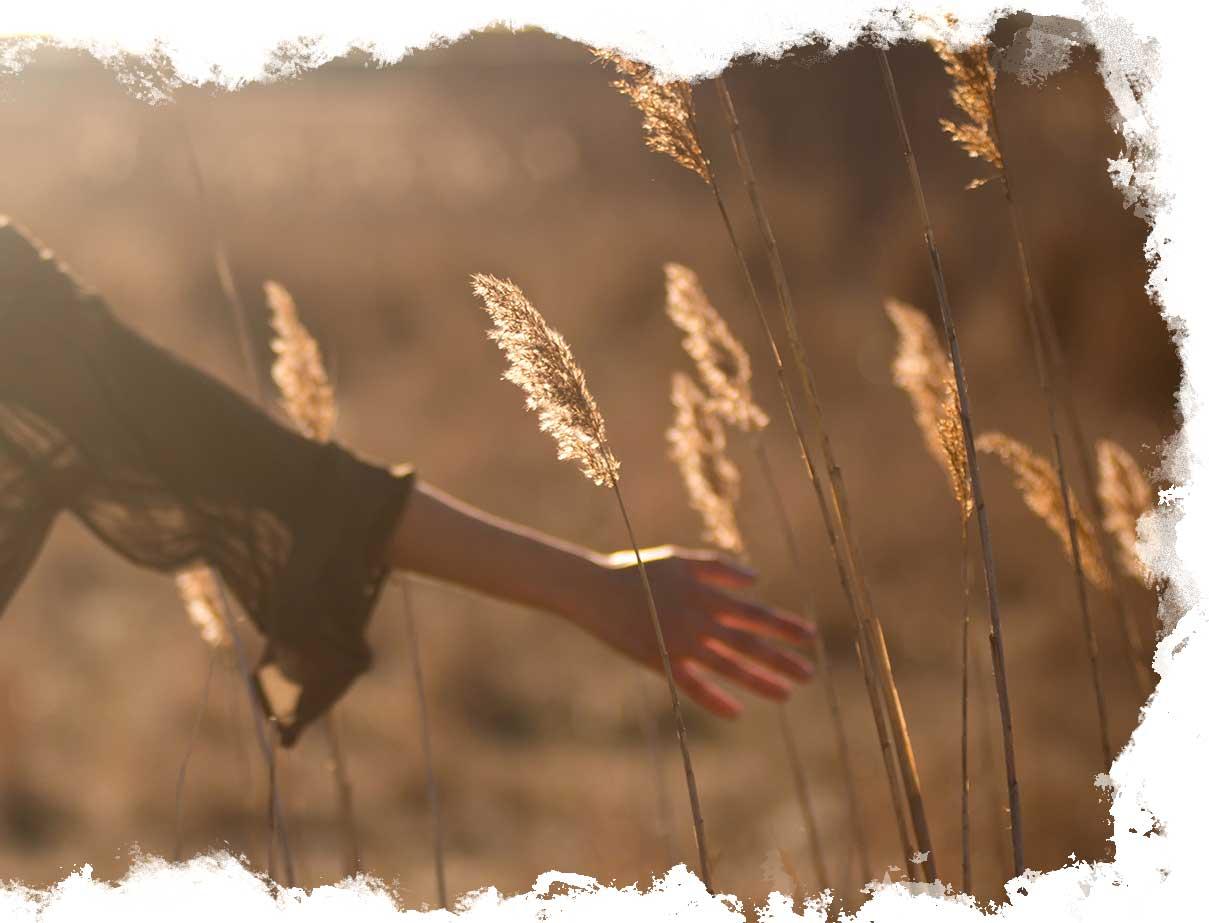 Photo d'une main qui caresse les brun d'herbe dans un champ au couché de soleil.